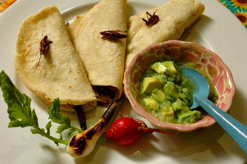 Grasshopper tacos at El Arrayán